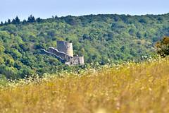 Le Château de La Roche Guyon vu de la Réserve Naturelle Nationale des Coteaux de la Seine