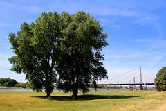 Rheinorange
