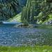 Silver Lake Tree Island