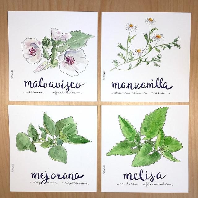 meseros-boda-pantas-medicinales-fitoterapia-bodas-tematicas-bodas-dibujadas-mdmrobert-9