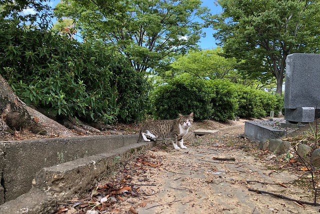 Today's Cat@2018-08-07