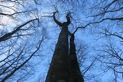 Les racines dans le ciel - Photo of Urcy