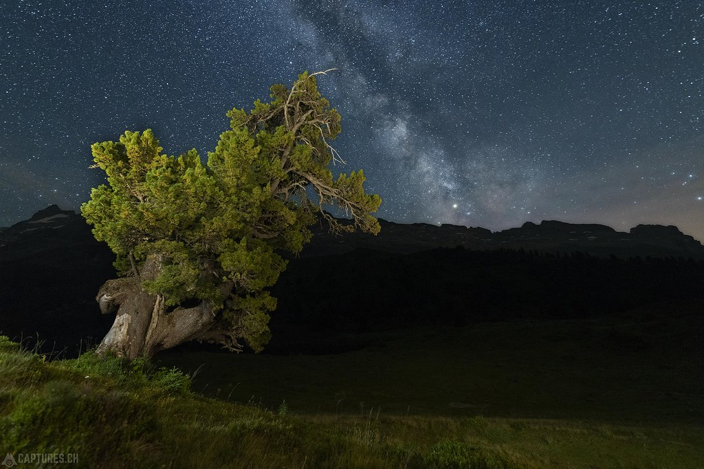 Hanging tree - Engstlenalp
