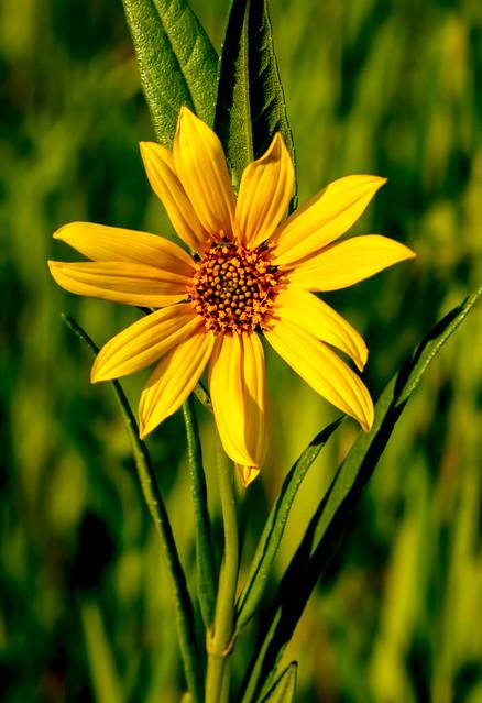 Wild-Flower-19-7D1-080918