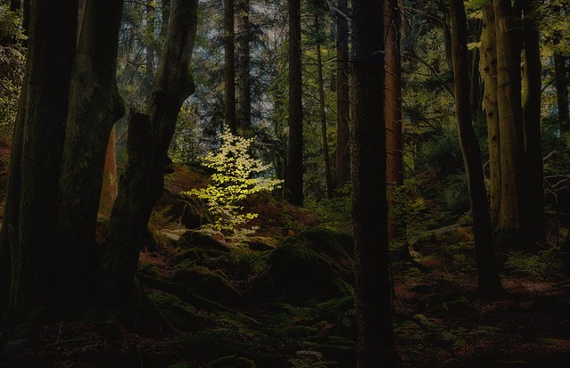 A mystic forest