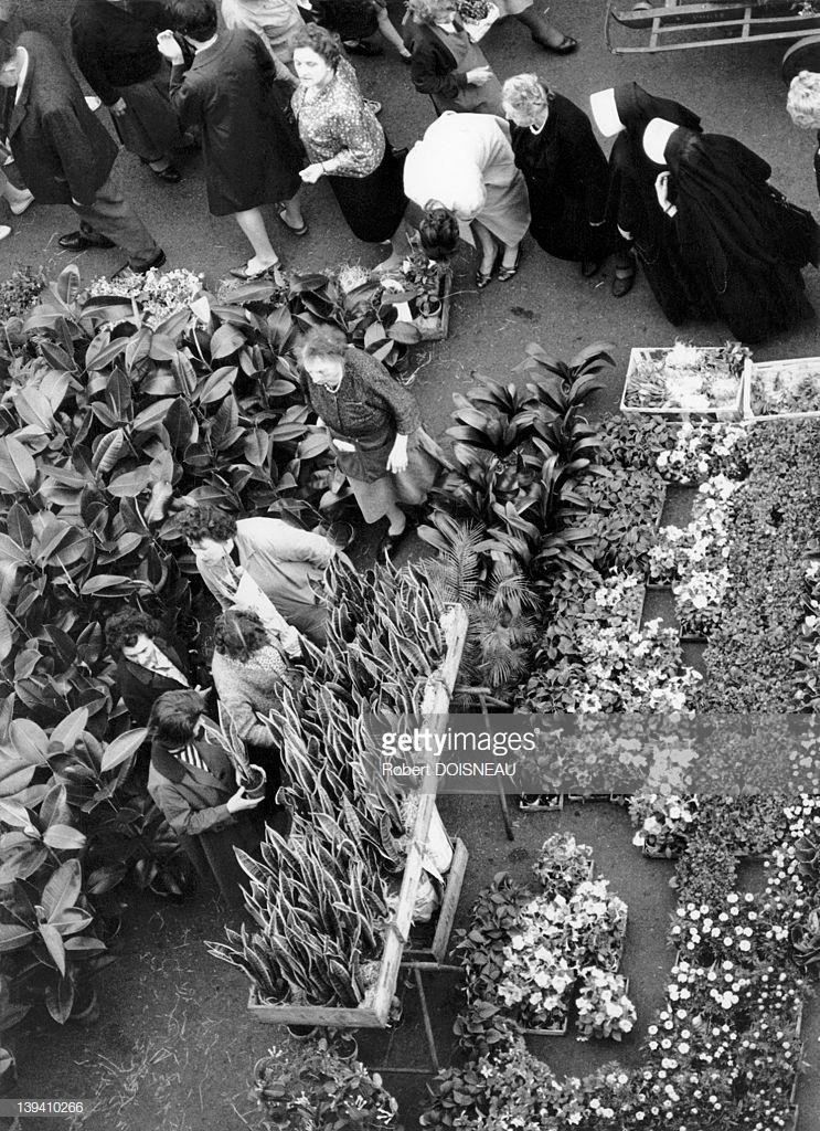 1964. Цветы в Ле-Аль