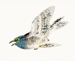 European herring gull by Kōno Bairei (1844-1895). Digitally enhanced from our own original 1913 edition of Barei Gakan.