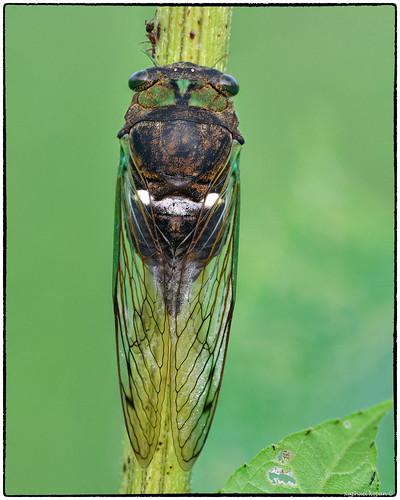 armlederpark cincinnati ohio raphaelkopanphotography nikon nikkor200f4macro d500 wildlife
