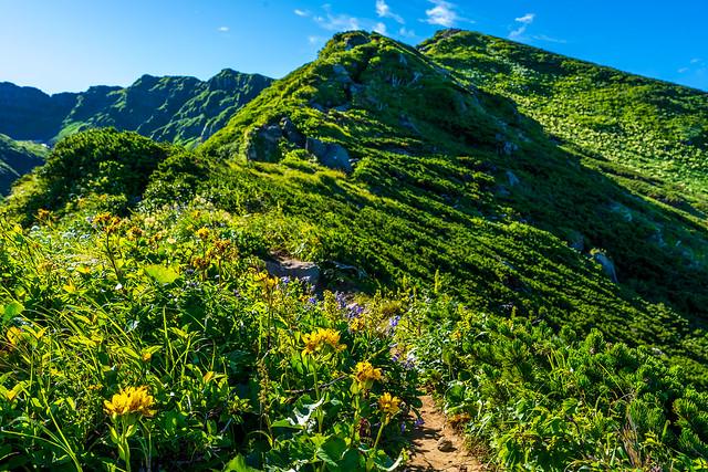 お花咲く外輪山コースを進む