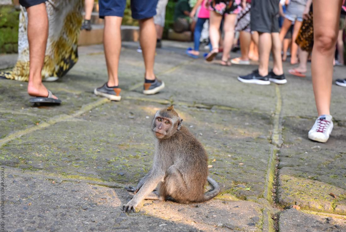Bali-Ubud-(86)