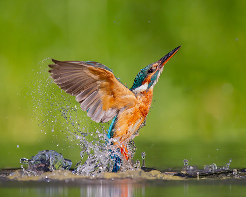 Kingfisher Exit