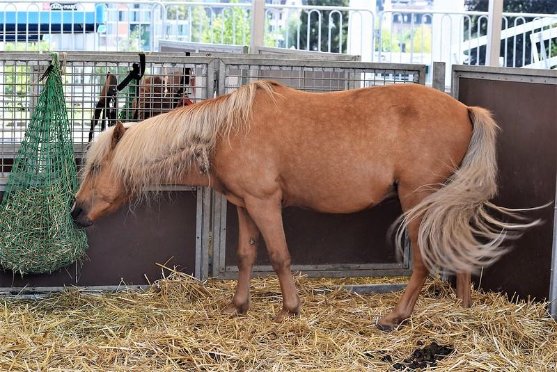 Circus Horse 07.08 (7)