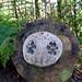 Barley, Aitken Wood - Pendle Sculpture Park. (10)