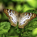 Butterfly in the Garden by Charles Patrick Ewing