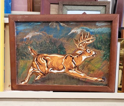 weird deer
