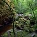 SCOTLAND - Birks of Aberfeldy