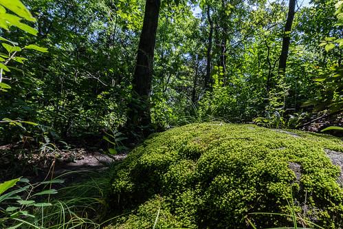 Moss over stone.jpg