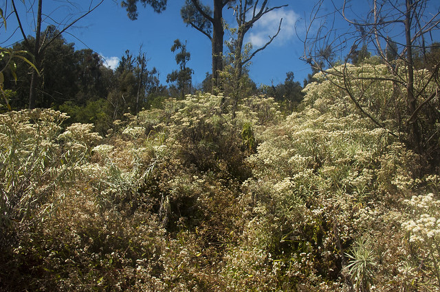 Flora at Gunung Raung