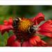 Double Bee