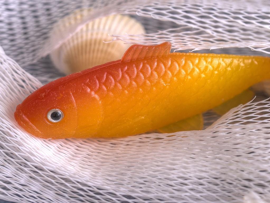 Il pesce rosso la pesca miracolosa si chiama pesce for Carpa pesce rosso