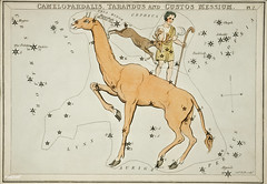 Sidney Hall's (1831) astronomical chart illustration of the Camelopardalis, Tarandus and the Custos Messium. Original from Library of Congress. Digitally enhanced by rawpixel.