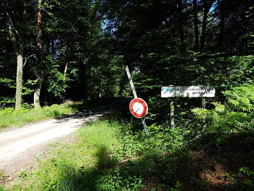 Forêt de Bordères
