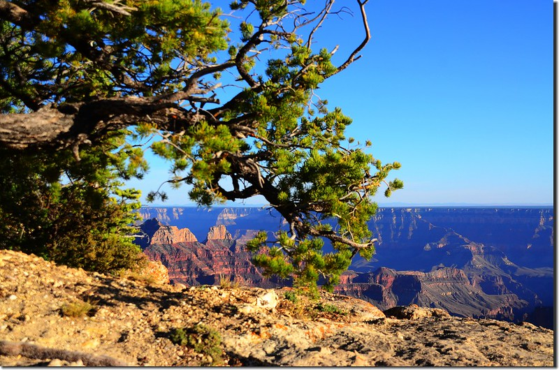 The view from Bright Angel trail (3)