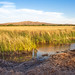 Bosque del Apache National Wildlife Refuge by Don Dunning