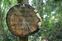 Written in the wood