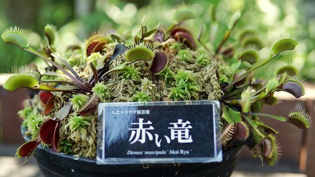 湿生花園DSC09970-01