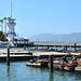 10. Leones marinos del pier 39 de San Francisco