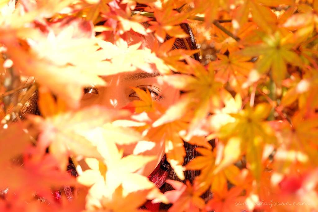 seoul_autumn_leaves