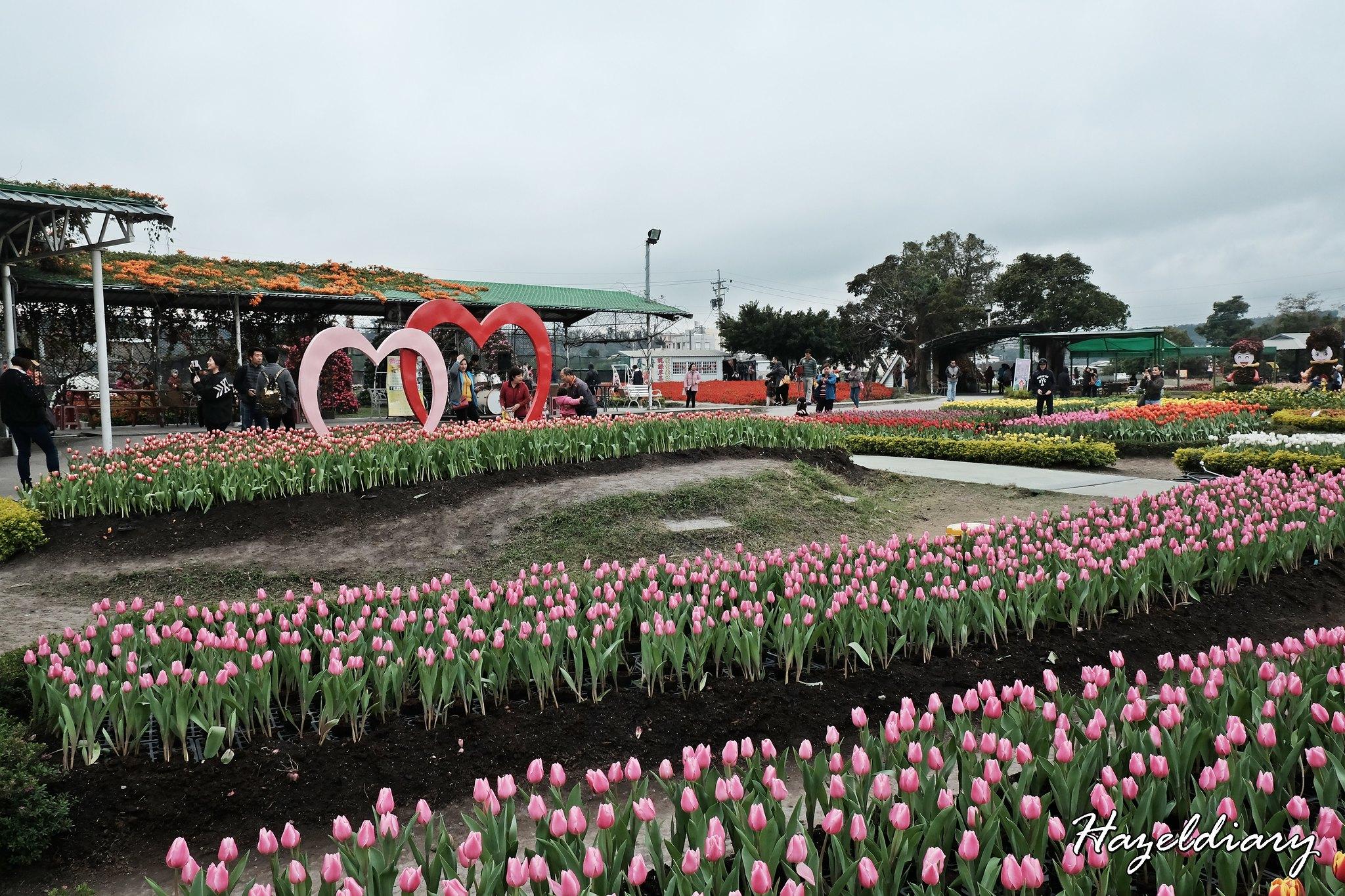 Zhong She Guan Guang Flower Market Taichung Taiwan-Tulip-3