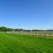 Chester racecourse, 2018 Jul 08 -- photo 2