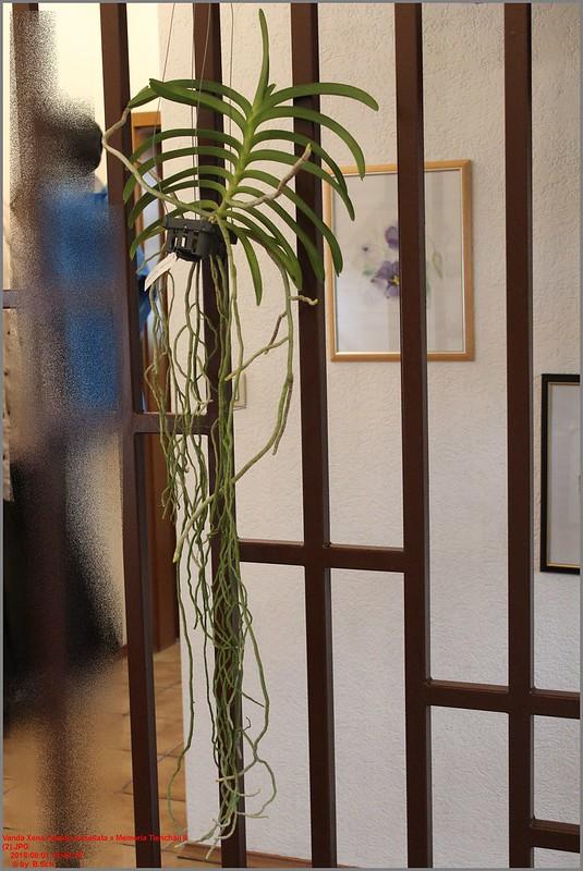 Orchideen-Neuzugang 2 - Seite 5 43739327952_2bb9c016fc_c