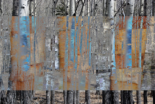 Birch trees layered in Photoshop