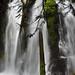 Panther Creek Falls by David Wang Photography