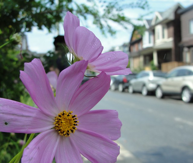 Photo Series Flower Portraits, Sony DSC-H20