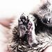 Wild Hedgehog rescue hoglet by scootiepye