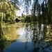 Ascott House Lily Pond