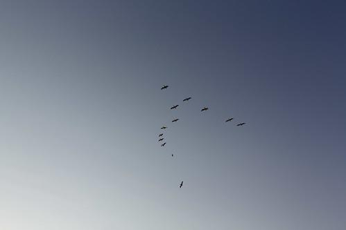 Birds above Battery Mendell