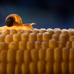 how corny