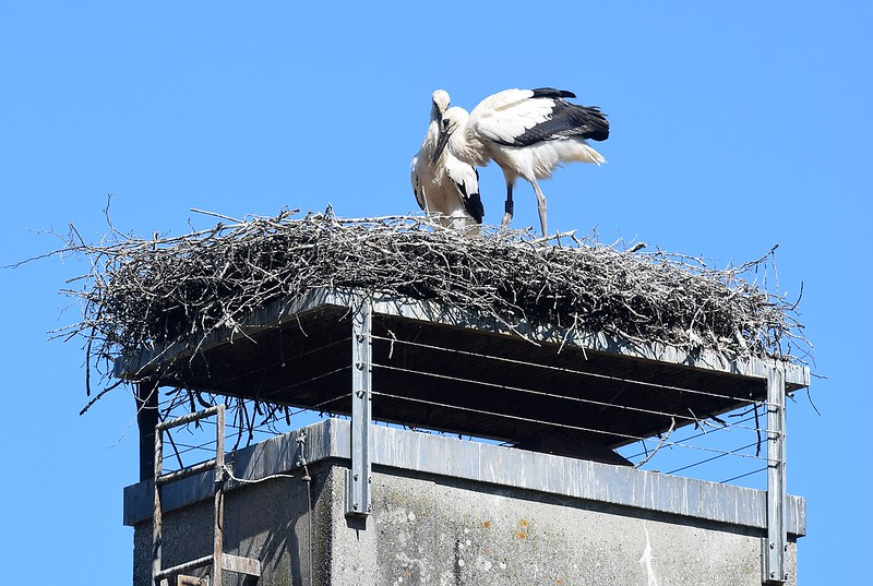 Storks 22.06 (5)
