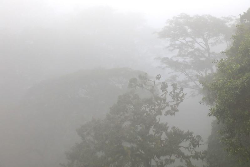 Ngorongoro fog