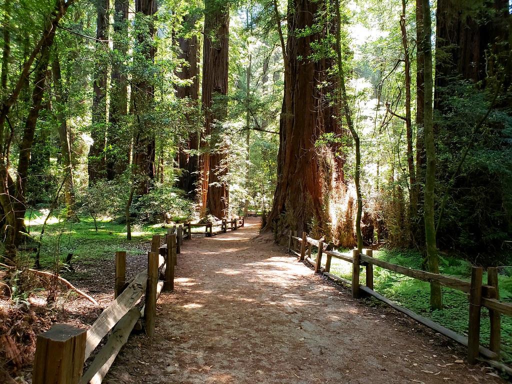 The Splendor of Trees