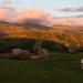 Summer Solstice Sacrificial Lamb by Craig Hollis