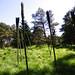 Barley, Aitken Wood - Pendle Sculpture Park (15)
