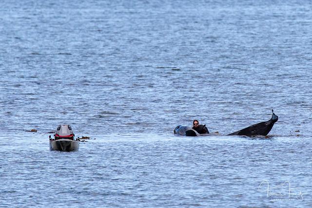 Saving the whale