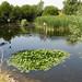 Wheeler's Pond, Eastbrookend Country Park, Dagenham