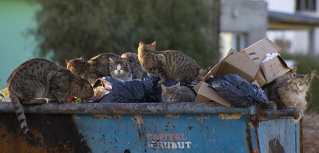 Gatos en basura